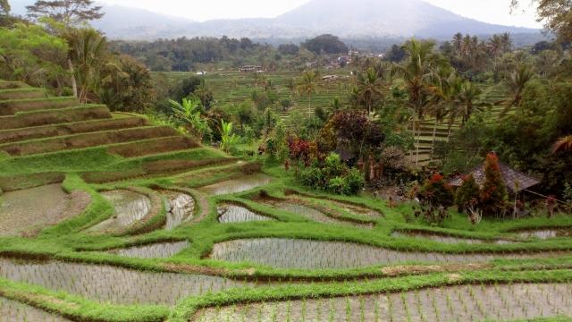 インドネシア農地